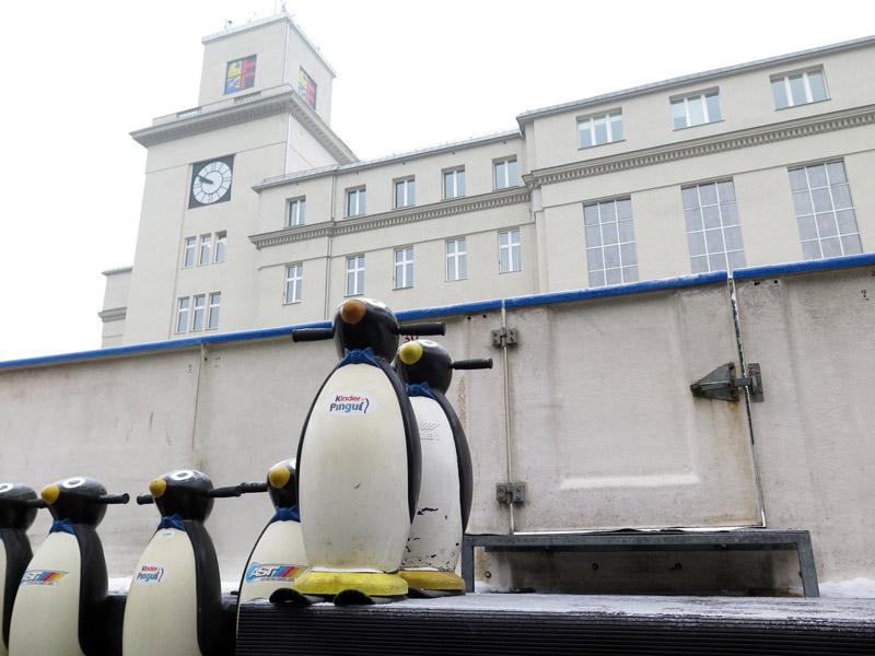 Pingwinki na lodowisku.